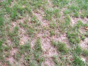 patches of dead grass