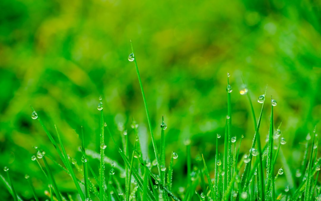 5 Tasks for Spring Lawn Care Maintenance