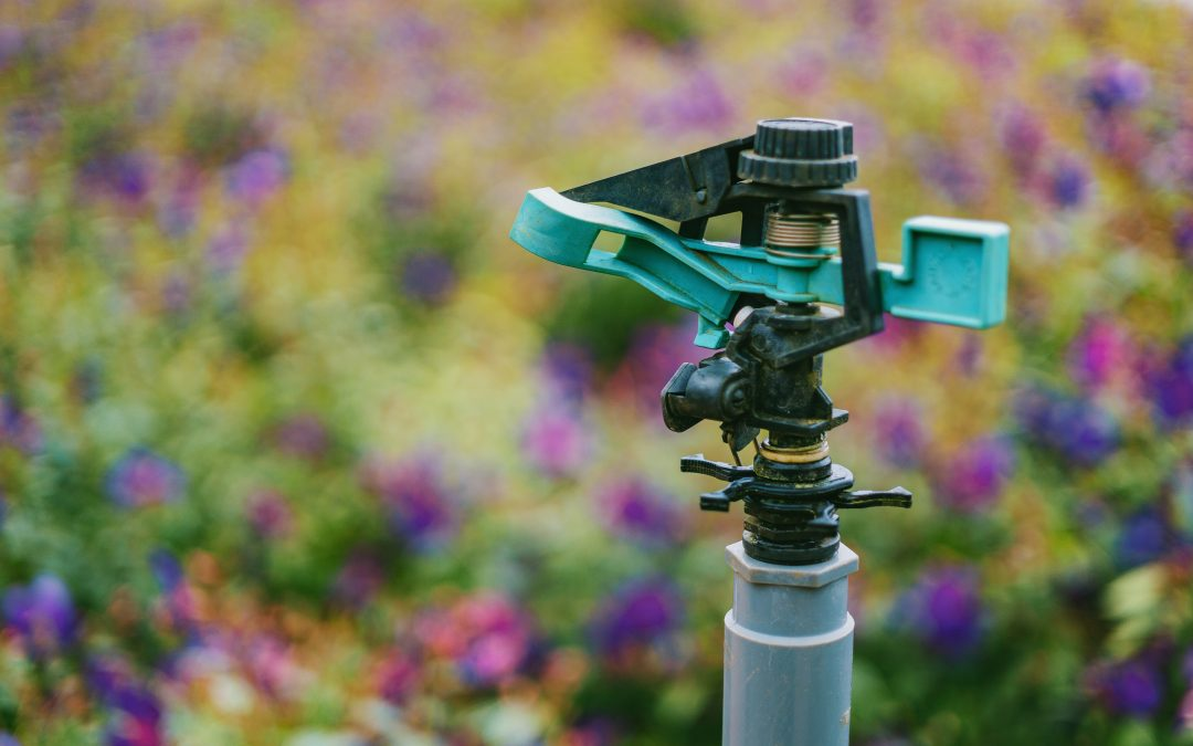 Best Watering Practices in Cache Valley