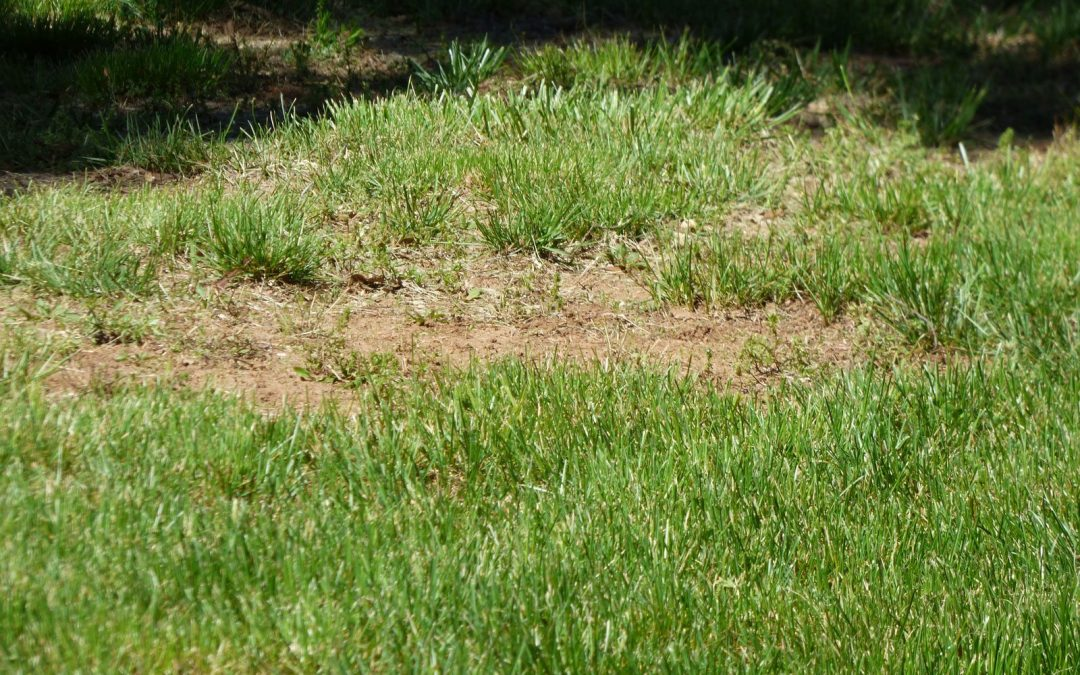 How to Avoid Dead Spots on Your Lawn