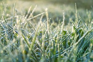 winter lawn care
