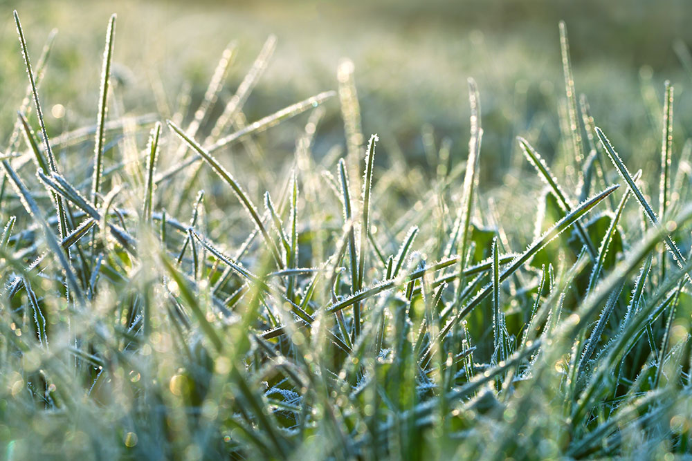Winter Lawn Care In Cache Valley